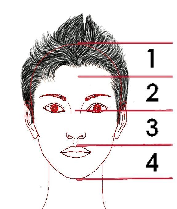 4.3. La proporción en el rostro. |